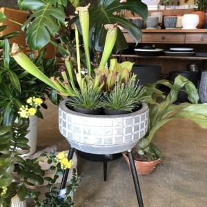 cozy cozyの庭 観葉植物