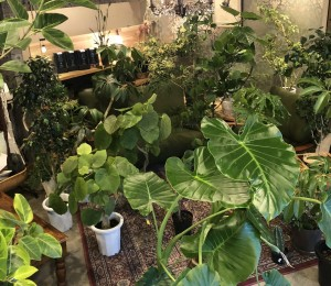 観葉植物 ウンベラータ シェフレラ サボテン 外構工事 エクステリア 新築 新築祝い