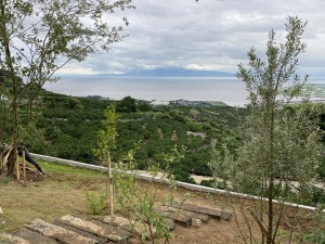 cozyの庭 植栽 ナルシストの丘