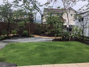cozyの庭 庭 芝生 デコライエロー